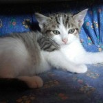 MELINA, femelle, 3 mois