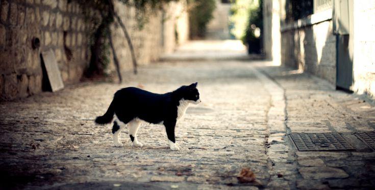 chats-des-rues-puy-de-dome01