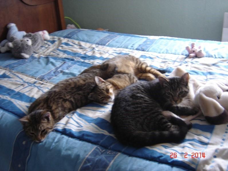 histoires de chats chats des rues 63. Black Bedroom Furniture Sets. Home Design Ideas