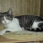 Mamie est une chatte tigrée et blanche pas très jeune, environ 10 ans, qui lorsqu'elle a été capturée ne parvenait plus à nourrir ses 3 chatons. Elle n'avait plus de lait, épuisée par les trop nombreuses portées qu'elle a dû faire au cours de sa vie. Les chatons déshydratés ont été récupérés à temps, ils sont maintenant en pleine forme ! Mamie a été testée FIV et FeLV, stérilisée et identifiée, elle  savoure maintenant le bonheur de dormir au chaud et de manger à sa faim chez sa nounou. Elle a besoin d'une famille tranquille qui lui permettrait de ne pas finir sa vie dans la rue.