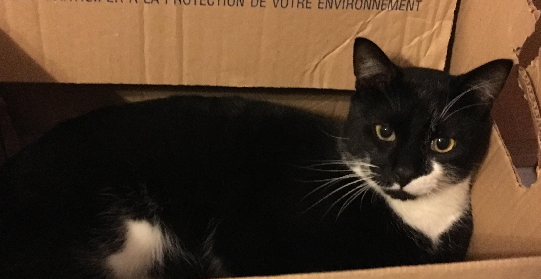 chat disparu quartier valli res chats des rues 63. Black Bedroom Furniture Sets. Home Design Ideas