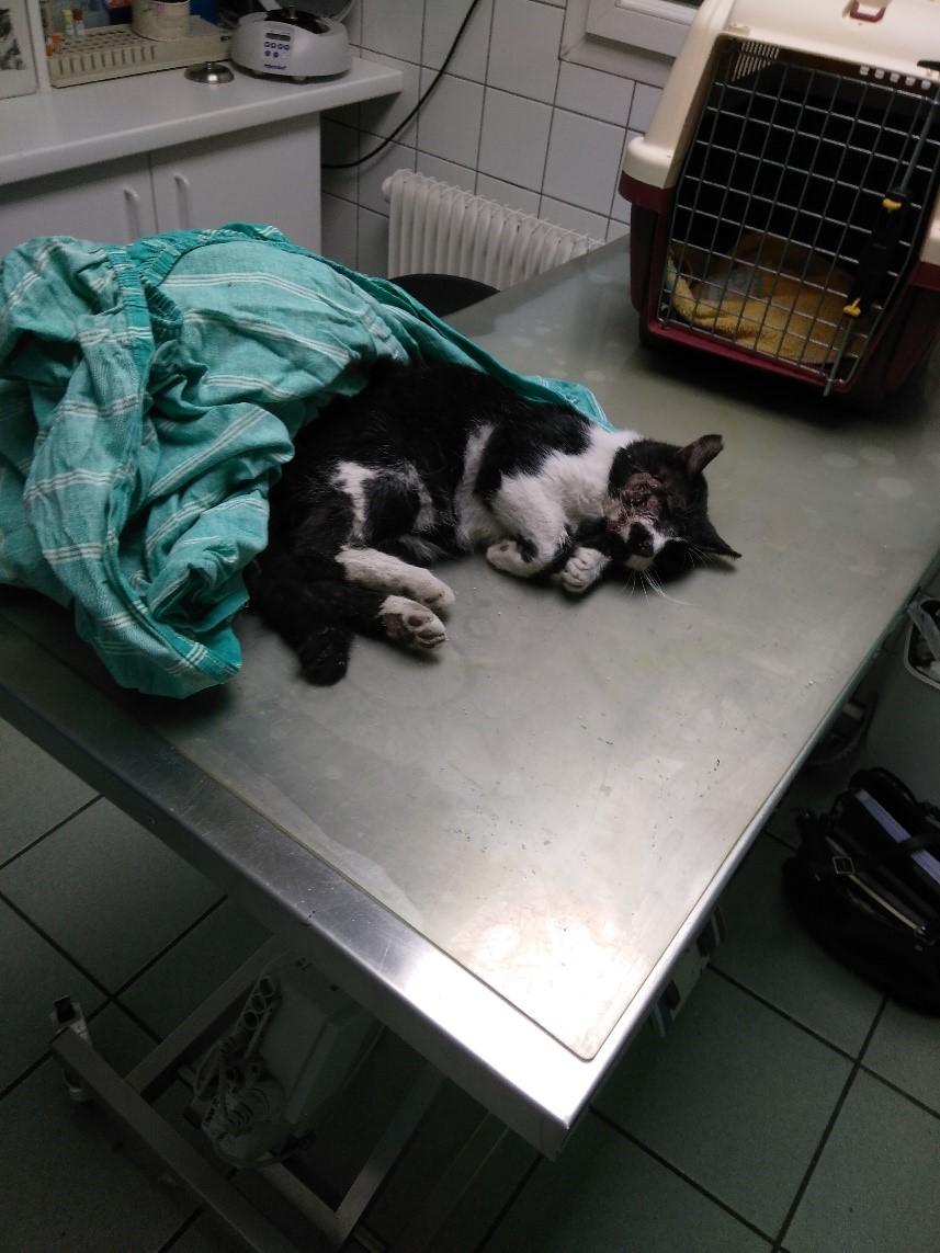 vous trouvez un chat errant alertez votre mairie chats des rues 63. Black Bedroom Furniture Sets. Home Design Ideas
