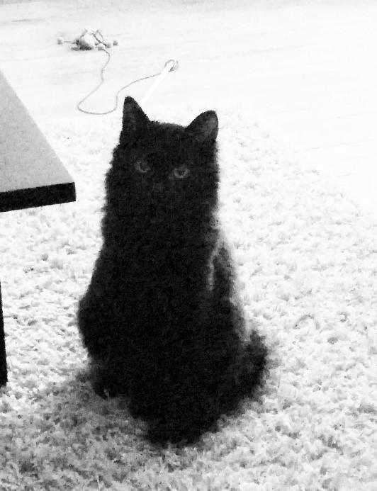 nouvelles de judy chats des rues 63. Black Bedroom Furniture Sets. Home Design Ideas